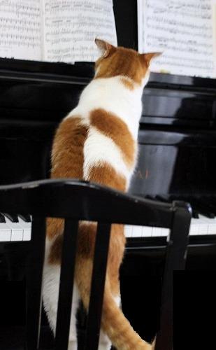 ブログNo.134(ピアノを弾く猫)5