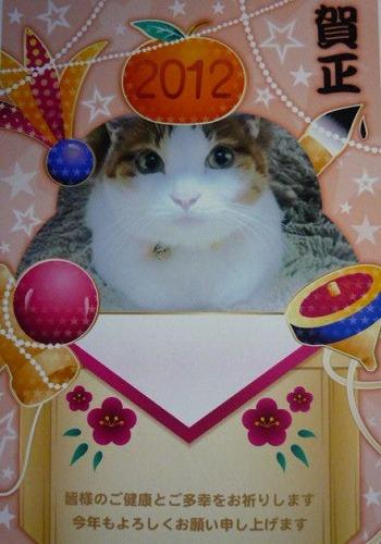 ブログNo.105(年賀状で振り返る猫)4