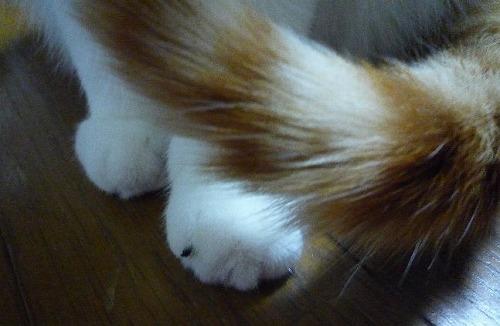 ブログNo.273(素晴らしい職人猫&紫陽花)3