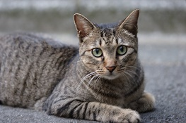 cat0006-001.jpg