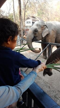 Thai and Laos 2015 Jan (110)