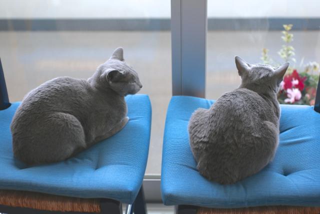 青い椅子上