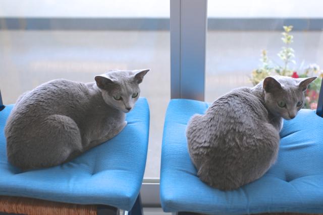 青い椅子 シンクロ