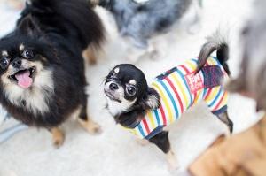 dogs-66_20150125074847156.jpg