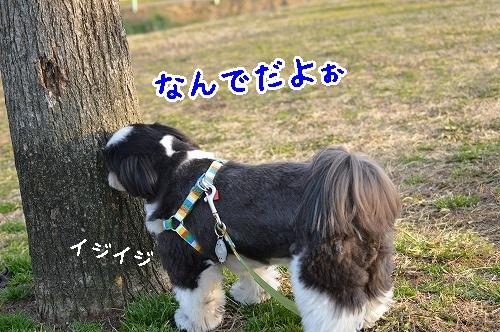 DSC_0032t_20150316162703c58.jpg