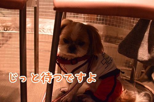 DSC_0065t.jpg