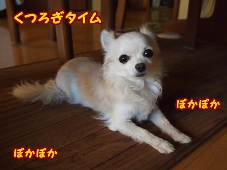 blog5390a.jpg