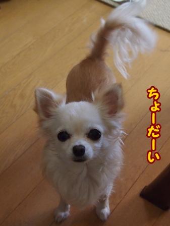 blog5392a.jpg
