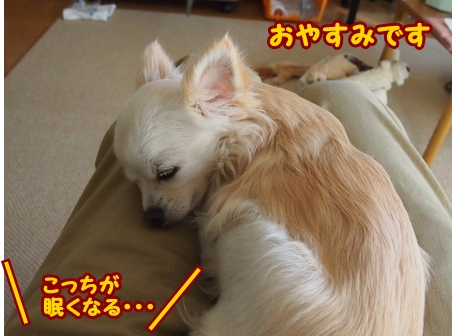 blog5416a.jpg