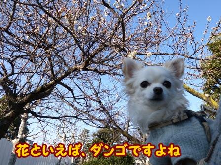 blog5542a.jpg