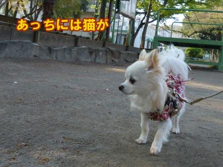 blog5796a.jpg