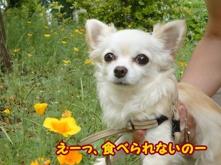 blog6024a.jpg