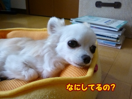 blog6025a.jpg