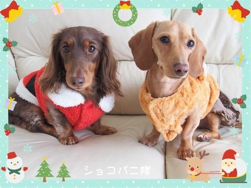 ショコラとバニラのクリスマス