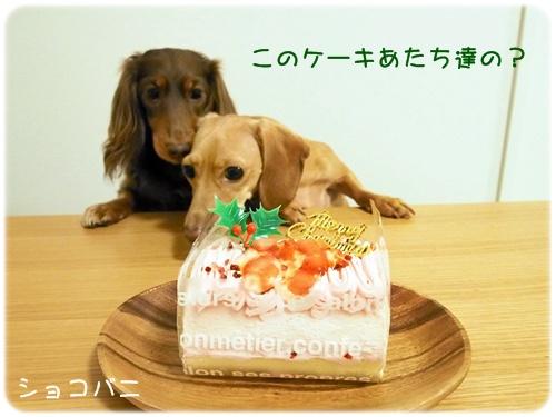 わんこ用ケーキとショコバニ