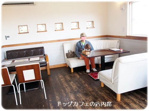 ドッグカフェ店内席