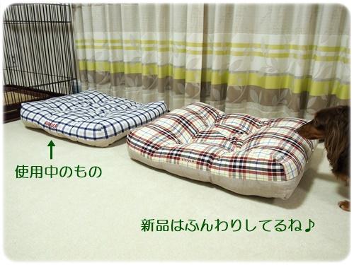 新と旧のクッションベッド