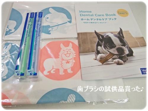 歯ブラシ試供品