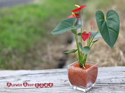 夏の贈り物 観葉