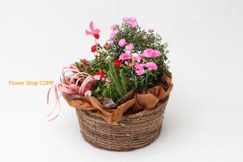 寄鉢 春の苗