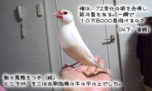 文悟空_10