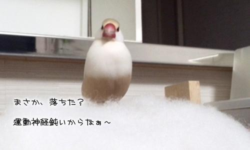 文悟空_16