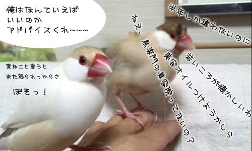 ちゃちゃの女心_5