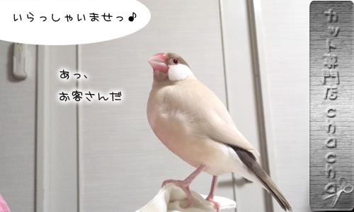 美容師ちゃちゃ_1