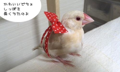 おしゃれのレッスン_3
