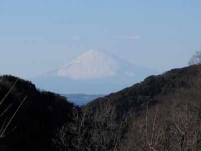 江月水仙ロード 富士山