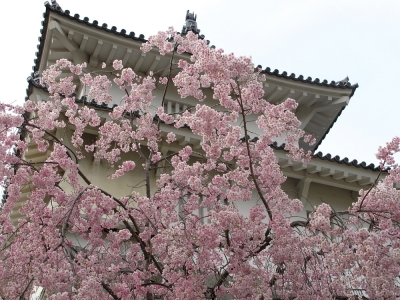 二本松・霞ヶ城公園の桜