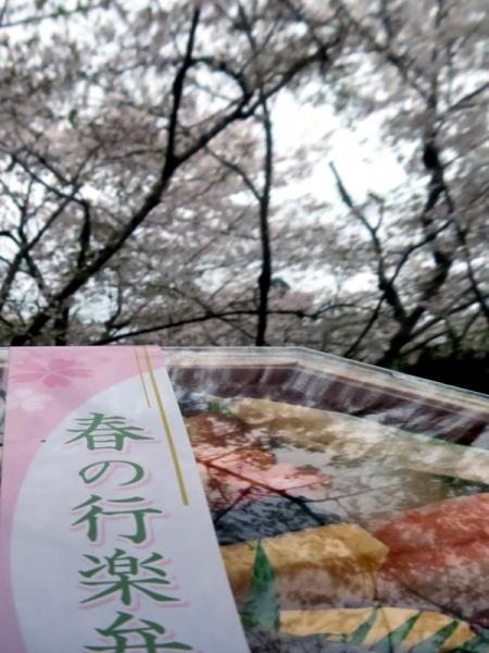 お弁当と桜