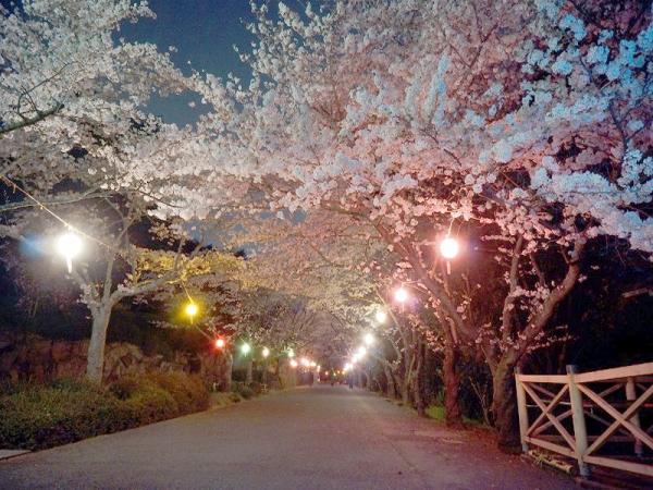 宵桜のトンネル