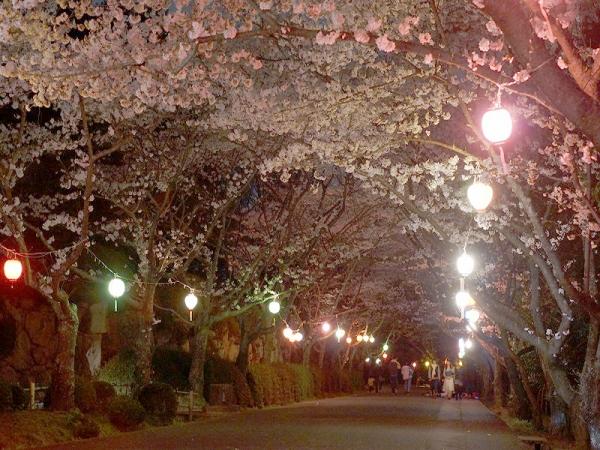 宵桜の賑わい
