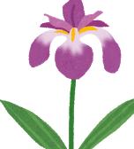 flower_syoubu.png