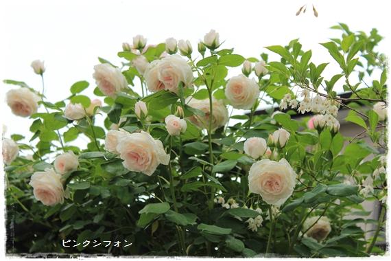 IMG_592911.jpg