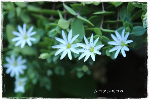 IMG_599911.jpg