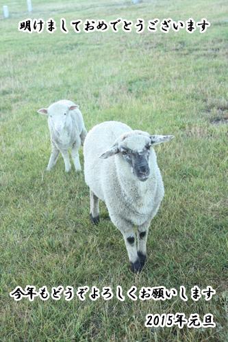 羊の国のラブラドール絵日記シニア!!「ひつじ年!羊の国のラブラドール」1