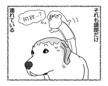 羊の国のラブラドール絵日記シニア!!「だからか!」4
