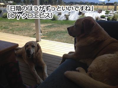 羊の国のラブラドール絵日記シニア!!「犬とガーデニングと私」7