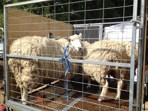 羊の国のラブラドール絵日記シニア!!「できるかな」4