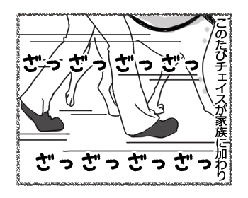 羊の国のラブラドール絵日記シニア!!「シニア生活改め・・・」3