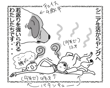 羊の国のラブラドール絵日記シニア!!「シニア生活改め・・・」4