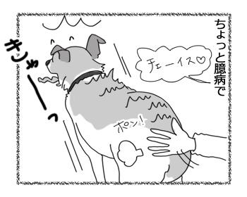 羊の国のラブラドール絵日記シニア!!「チェイスのあれこれ」3