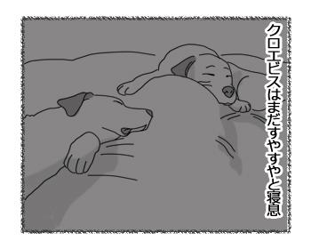 羊の国のラブラドール絵日記シニア!!「早起きは三文の・・・?」2