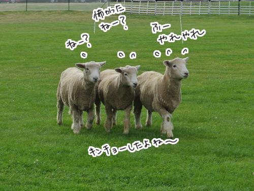羊の国のラブラドール絵日記シニア!!「羊の国のシープドッグ・トライアル」4