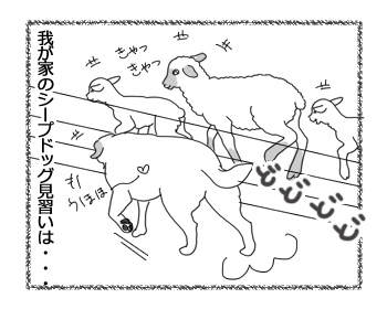 羊の国のラブラドール絵日記市にあ!!「シープドッグ奮闘記」2