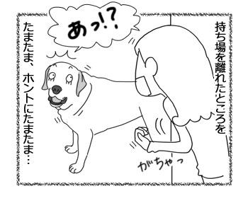 羊の国のラブラドール絵日記シニア!!「な、何のことですか?」4