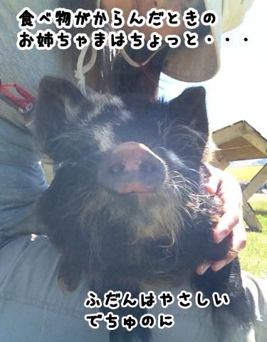 羊の国のラブラドール絵日記シニア!!「拾い食いのバカ力」写真1
