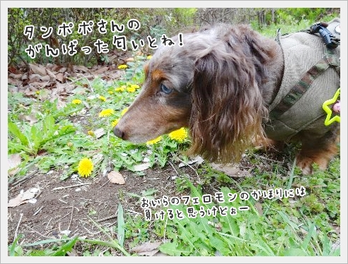 fc2_2015-4-14_04.jpg